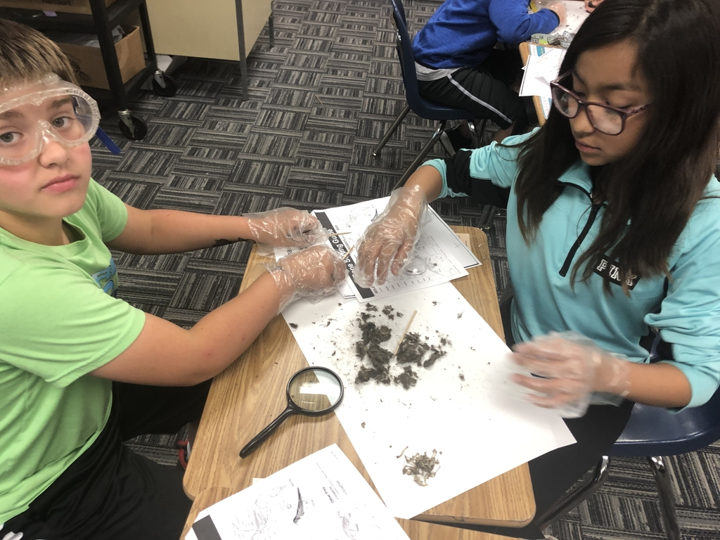 Owl pellet dissection