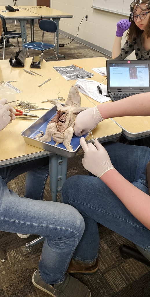 Pig dissection in Animal Science